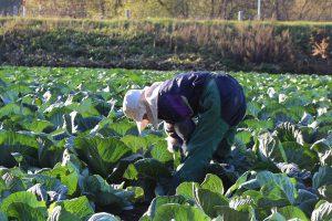 10月の農作業