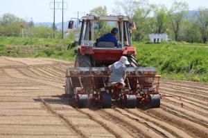 大豆の播種と南瓜の定植作業が行われました